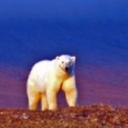 Конкурс на участие в экологической экспедиции на остров Белый (ЯНАО)'s Cover