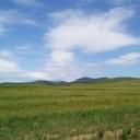 На таком же поле в 10 километрах был наш покос. Утром мы выезжали, а вечером приезжали в Алтан, к дяде Саше.