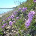 Природа Северного Байкала