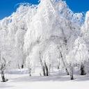 earth-seasons-winter-13964